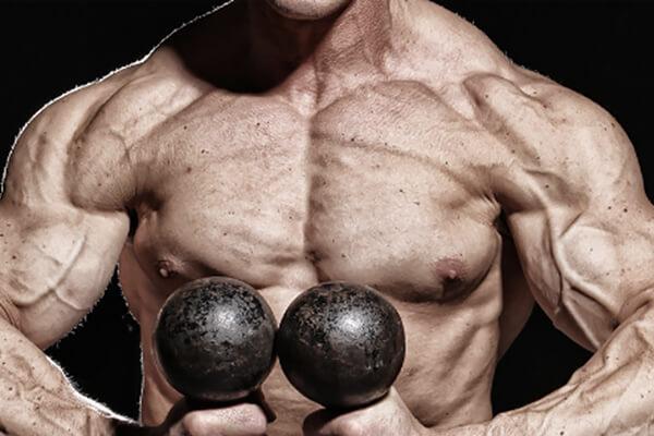 筋肉 テストステロン